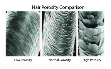 Getting To Know Your Hair Understanding Porosity Nadia S Notes